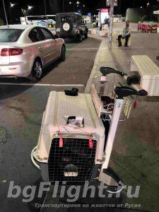 Кой прави докарване на куче от Русия със самолет?